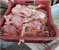 صور|  «الزراعة»: ضبط 16 طنا من اللحوم الفاسدة بالمحافظات