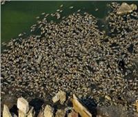 محافظ القليوبية يشكل لجنة لكشف أسباب نفوق الأسماك بـ«عرب العليقات»