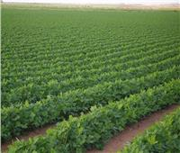 «الريف المصري» توقع أول عقود لأراضي الـ1.5 مليون فدان