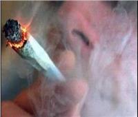 شركة دخان تطلب 5 حشاشين للعمل بـ«50 دولار في الساعة»