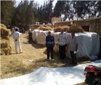 «وكيل الزراعة بالشرقية»: انخفاض معدلات حرق قش الأرز بالمحافظة