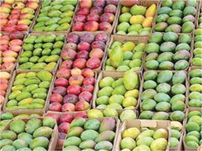 أسعار «المانجو» في سوق العبور الثلاثاء 2 أكتوبر