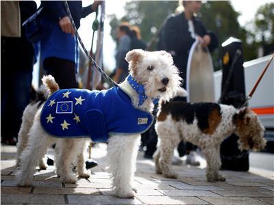 صور|الكلاب البريطانية «تنبح» رفضا للخروج من الاتحاد الأوروبي: سنموت جوعا