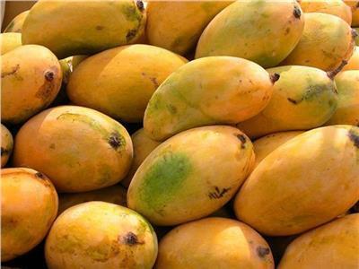 أسعار «المانجو» في سوق العبور الاثنين 8 أكتوبر