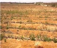 طرح 110 قطعة أرض فضاء تابعة للإصلاح الزراعي للبيع .. الأربعاء المقبل