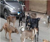 «الطب البيطري» بالقاهرة: نتخلص من الكلاب الضالة بهذه الطرق