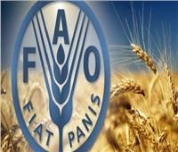اليوم|«الزراعة» و«الفاو» يحتفلا بيوم الأغذية العالمي تحت شعار «القضاء على الجوع»