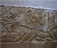 دراسة: «المزارع السمكية» من ابتكار القدماء المصريين