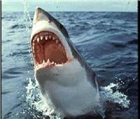 فيديو وصور| سمكة قرش طولها مترين تقفز داخل قارب صيد