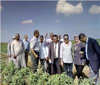 «الزراعة» تتابع تطعيم الخيار والبطيخ بالدقهلية