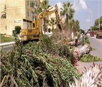 فيديو| النظافة والتجميل: قطع الأشجار الخطرة بشوارع ومدارس القاهرة