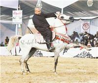 بالصور| تربية الخيول.. هواية الأغنياء