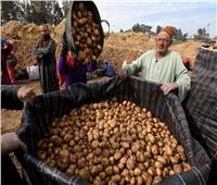 فيديو| نقيب الفلاحين: «المزارعون باعوا كيلو البطاطس للتجار بأقل من جنيه»