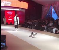 بالفيديو| قطة تتحدى عارضات الأزياء وتخطف الأنظار