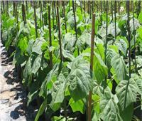 «الزراعة»: تصدير شتلات فاكهة وتقاوي مطابقة للمواصفات للخارج
