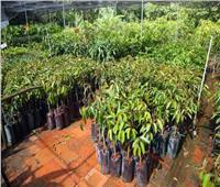 إجراءات «الزراعة» لمواجهة مشاتل الخضر والفاكهة غير المرخصة