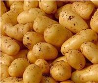 «الزراعة» تستعد لطرح محصول البطاطس العروة النيلية بالأسواق خلال أيام