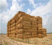 فيديو| البيئة: تجميع 90% من قش الأرز على مستوى الجمهورية لمنع حرقه