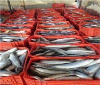 الزراعة: إنتاج المزارع السمكية بمصر يُصدر إلى أوروبا