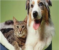 فيديو| الزراعة تنفي شائعات تصدير الكلاب والقطط