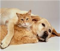 «البحوث الإسلامية» توضح حقيقة فتوى «أكل لحم الكلاب والقطط»