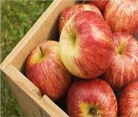 تفاحة هدية لوزير التموين