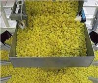 «صناعة الحبوب»: توريد أجود أنواع المكرونة لـ«التموين»