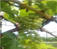 «أبوستيت»يكشف عن مشروعات زراعية جديدة مع الدول الإفريقية