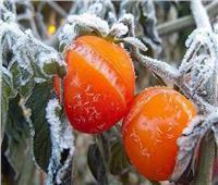 احمي محصولك| نصائح تجنبك أضرار الصقيع.. تعرف عليها