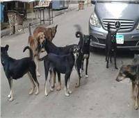 دعوى قضائية لوقف قتل كلاب وقطط الشوارع