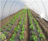 شعبة الخضراوات والفاكهة: الصوب الزراعية تقضي على الاحتكار