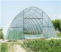 فيديو| الزراعة: مشروع الصوب يحقق وفرة كبيرة في الخضر والفاكهة