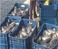 الزراعة: نصدر أسماك لـ 18 دولة منها بريطانيا وإسبانيا وفرنسا