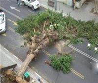 موجة الطقس السيئ تسقط عمود نور وشجرة في الدقهلية
