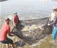 بحيرة المنزلة «كنز سمكي» يعاد اكتشافه.. المشروع ظهرت نتائجه على الواقع