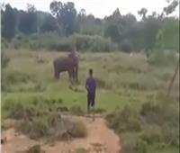فيديو فيل يسحق رجلا حاول تنويمه مغناطيسيا