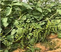 صور| الزراعة تواصل حملات للتوعية بأهمية «الصوب»