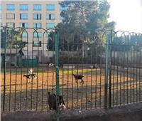 «ماعز» في حديقة الاندلس بطنطا .. ومواطنون: «نشاط اقتصادي»