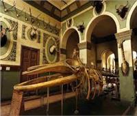 العناني يبحث الاستعانة بمقتنيات المتحف الزراعي لعرضها بـ«الحضارة»