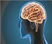 دراسة تؤكد: حجم المخ ينقص.. مع زيادة الوزن