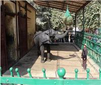 «حديقة الحيوان»: التغذية بالمشروبات الساخنة ليست مستحدثة وهي للوقاية من البرد