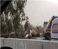 إغلاق طريق «الإسماعيلية- بورسعيد» بسبب تساقط الأشجار