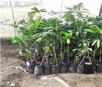 «الزراعة»: تصدير 127 ألف شتلة فاكهة مطابقة للمواصفات القياسية