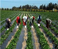 فيديو  الاتحاد الإفريقي: مصر تساهم بكوادرفي تنمية البحوث الزراعية بالقارة
