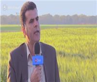 فيديو| مدير المزرعة المشتركة مع زامبيا: القمح المصرى جودته عالية
