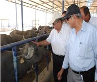 اليوم.. وزير الزراعة يتفقد مشروع استزراع الـ20 ألف فدان غرب المنيا