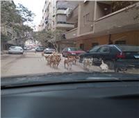 أهالي كوتسيكا: اغيثونا من الكلاب الضالة