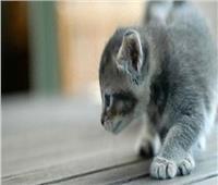 «تأكل وتنكر».. حكاية القطط التي أكلت صاحبها بالساحل