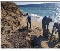وزارة البيئة تزيل بقع تلوث زيتي بشاطئ محمية رأس محمد
