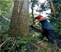 دراسة علمية تحذر من انخفاض المحاصيل الزراعية بسبب إزالة الغابات